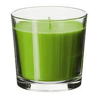 SINNLIG   Ароматическая свеча в стакане, зеленый Зеленое яблоко, зеленый