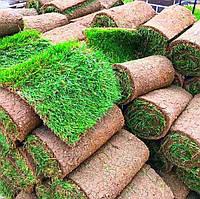 Трава рулонная – газон для сада