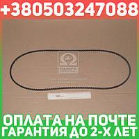 ⭐⭐⭐⭐⭐ Ремень клиновой (производство  Contitech)  10X1450