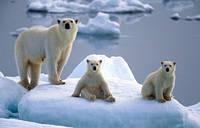 2015 новый DIY 3D алмаз живопись лед снег семья белый медведь прямоугольник стразами мозаи
