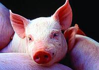Премикс (ВМС) для свиней Стартер 4%