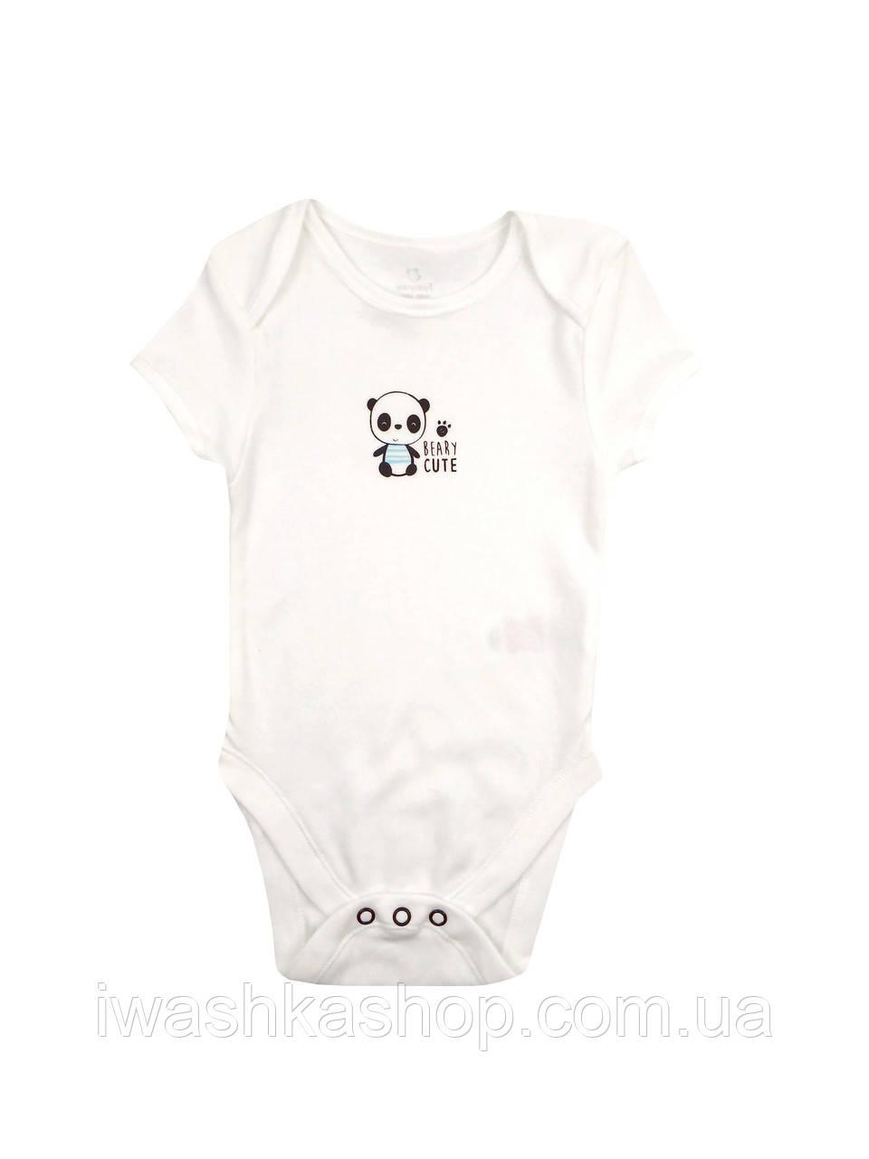 Боди с коротким рукавом с пандами для мальчика 3 - 6 месяцев, р. 68, Early days by Primark