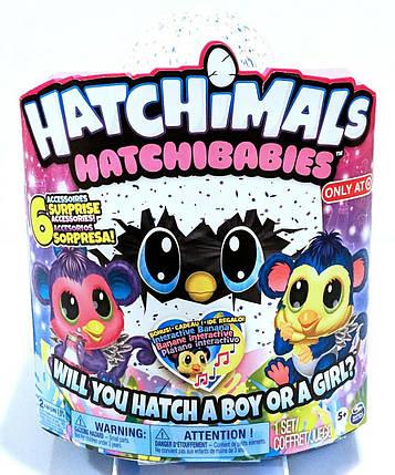 Интерактивная игрушка Хетчималс Малыши Обезьянки Сюрприз в яйце Hatchimals Hatchibabies Monkiwi, фото 2