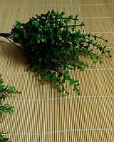 Куст эвкалипта, фото 1