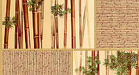 Обои бумажные мойка  Шарм 0,53*10,05  Бамбук   кухня, коридор, спальня