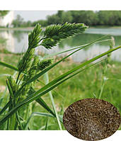Насіння господарських трав Грястиця 1 кг (Україна)