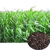 Насіння господарських трав Суданка 1 кг (Україна)