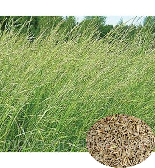 Трава господарська на укіс Вівсяниця Вартість за 1 кг  Україна