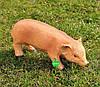Садовая фигура Свинья большая, Кабанчик средний и Хрюша, фото 4
