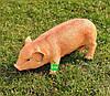 Садовая фигура Свинья большая, Кабанчик средний и Хрюша, фото 5