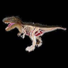 Об'ємна анатомічна модель Динозавр Тираннозавр