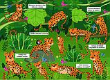 Книга У джунглях. Книжка з секретними віконцями / В джунглях. Книжка з секретними віконцями, (рос, укр мови) 2+, фото 4