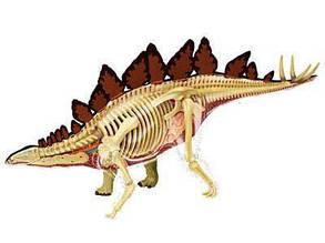 Об'ємна анатомічна модель Стегозавр