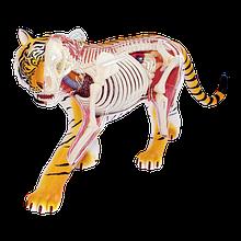 Об'ємна анатомічна модель Тигр