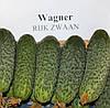 Семена огурца Вагнер (Wagner RZ) F1, 1000 семян партенокарпический