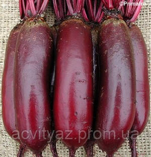 Семена свеклы Карилон (Carillon RZ), цилиндрический PR. 25 тыс.семян