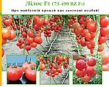 Насіння томату Лилос 73-490 (Lilos RZ) F1, 1000 насіння, фото 2