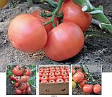 Семена томата Эсмира (Esmira RZ) F1 розовый, 1000 семян, фото 3