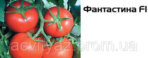 Насіння томату Фантастина F1, 500 насінин