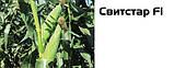 Семена сладкой (сахарной) кукурузы Свитстар F1, 100 тыс. семян, фото 3