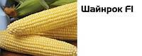 Семена сладкой (сахарной) кукурузы Шайнрок F1, 100 тыс. семян, фото 1