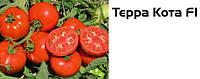 Семена томата Терра Котта F1, 2500 семян