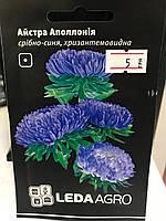 Астра Аполлония хризантемовидная серебряно-синяя 0,2г