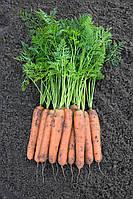 НОМИНАТОР F1 / NOMINATOR F1 - морковь, Bejo 100 000 семян 2,0-2,2