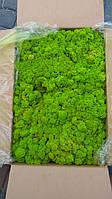 Мох стабилизированный 55 spring green. УПАКОВКА 0.5 КГ
