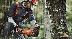 6 шагов успешного процесса вырубки деревьев