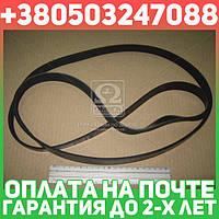 ⭐⭐⭐⭐⭐ Ремень поликлиновый 6PK1930 (производство  DONGIL)  6PK1930