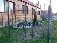 Кованый забор П-26, фото 1