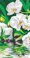 Орхидея у воды (часть 1), фото 1