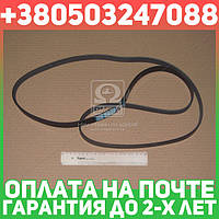 ⭐⭐⭐⭐⭐ Ремень поликлиновый 6PK1920 (производство  DONGIL)  6PK1920