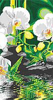 Орхидея у воды (часть 2), фото 1