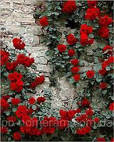 РукИТвор Картина по номерам (MR-Q108) Вьющаяся роза (40 х 50 см)