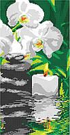 Орхидея у воды (часть 3), фото 1