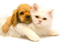 Ветпрепараты для мелких домашних животных