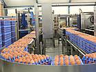 Лотки для куриных яиц пластиковые  Jumbo 65-75 г, фото 5