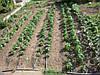 Капельное Орошение Урожай 1000 Система На 10 Соток, фото 7