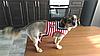 """Мягкая шлейка с поводком  """"Моряк"""" для  кота, собаки. Одежда для  кошек, собак, фото 9"""