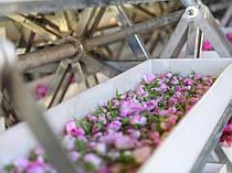 ПРОИЗВОДСТВО Болгарская OrganiRose является производителем нежных органических косметических продуктов из розовой воды, розового масла и других питательных, омолаживающих и тонизирующих ингредиентов. Мы используем натуральные  ингредиенты.