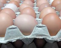 Домашнее яйцо от молодки С3