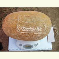 Семена дыни АМАЛ F1, 1000 семян, фото 1