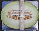 Семена дыни АМАЛ F1, 5000 семян, фото 3