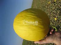 Семена дыни ФОРБАН F1, 1000 семян New!, фото 1