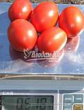 Семена томата ФОРСАЖ (ФРИСКО) F1, 1000 семян, фото 2