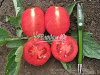 Семена томата СТЕЛЛА РЕД F1, 5000 семян New!, фото 1