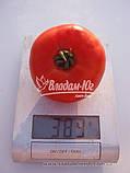 Семена томата КАСТА ( СУПЕРНОВА ) F1, 1000 семян New!, фото 4