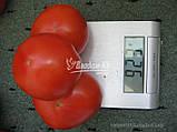Семена томата АКЕЛА F1, 5000 семян New!, фото 2